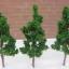 ต้นไม้ สีเขียว 25 ต้น ขนาด 5 ซ.ม. thumbnail 1
