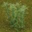 ต้นไผ่ (สเกล 1:200) สูง 8 ซ.ม. / 50 ต้น thumbnail 1
